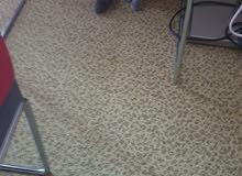 قطه اسكوتش فولد ابيور سبعت اشهر مع الجواز والسندوق والتربوكس الرمال والاكل السعر 4000قابل للتفاوظ