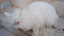 قطة بسعر مغري