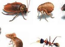 تنظيف منازل بالرياض فلل شقق مكافحة الحشرات بالضمان