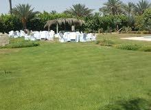 مزرعة فدان ونصف - هذا العقار بمصر