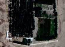 مزرعة في السلاحية ولاية السنينة