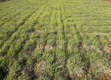 ارض زراعيه للبيع