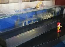 حوض سمك للبيع أو البدل على حسون