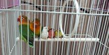 طيور متنوعة عدد (6)