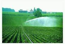 الأمل للاستثمار الزراعى