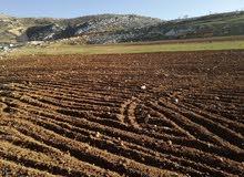 للبيع اربعه دنم في كفرهودا مستويه مرتفعه جميله مطله على جبال فلسطين