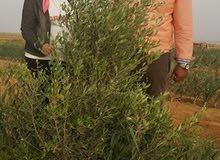 ارض زرعه للبيع 20فدان مسجلة
