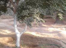 ارض سكنية بدير البلح غرب طريق صلاح الدين 731 متر