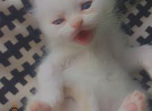 قطة راءعة مميزة