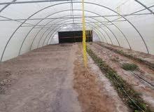 Seek for farmer green house