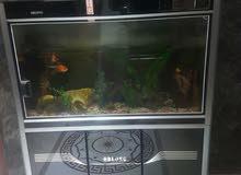 حوض سمك كبير كامل