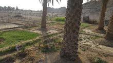 اللبيع مزرعه ف مضيبي منطقه افلاج