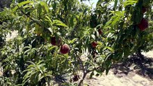 مزرعه منتجه 40 فدان فى وادى النطرون