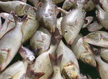 رحلات لصيد الاسماك