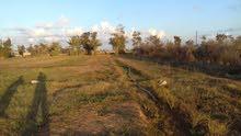 هكتارين عقد تمليك خاص للبيع بمنطقة طمينة