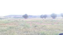 مزرعه مثمره 24هكتار في غنيمه للبيع