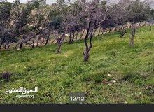 قطعة أرض ذات اطلاله رائعه في منطقة صروت قريب جدا من عمان