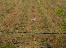 مزرعة 20فدان قابله للتجزئة مرحلة اولى