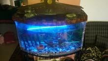 حوض سمك 50