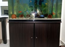 Fish Tank with accessories sale
