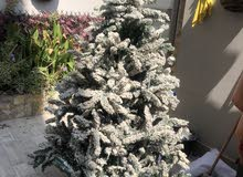 شجرة كريسماس للبيع