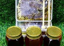 عسل من مناحل عراقية غذاء النحل على رحيق السدر والكالبتوز والبرسيم