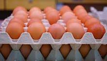 تسويق بيض المائده