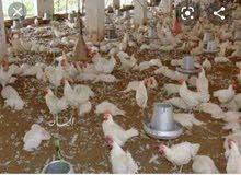 مزرعة دواجن مجهزة ومنتجه للبيع في موقع مميز