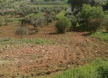 ارض للبيع مشجره بالكامل اشجار زيتون بلدي (60)شجره مخدومه بطريقين زراعيين داخل حد