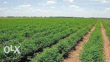 ارض زراعيه للايجار- 5 فدان - ك63 طريق مصر اسكندريه الصحراوى