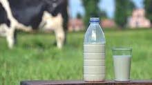 حليب أبقار