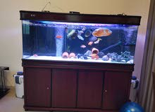 Brand new 150 Cm camry aquarium with external filter for sale