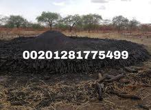 فحم طلح احمر من جنوب السودان للتصدير