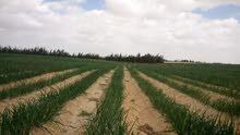 مزرعه 16 فدان ملك مسجل عقد اخضر ري بحاري بالغمر