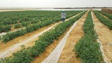اطلع بره زحمة وإمتلك مزرعة في موقع 6أكتوبر طريق الواحات