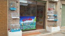محل الكناري لبيع وشراء طيور الزينة وملحقاتها