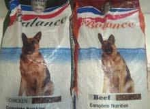 يتوفر اكل كلاب تايلندي