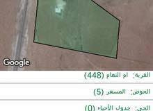مزرعه للبيع جنوب المنشيه  حوالي 5 دونمات