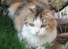 قطه زينه