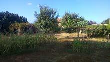 ارض زراعية شهادة عقارية في مدينه سوسه