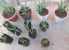 New Natural and Artificial Plants is available for sale directly from the owner