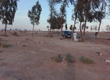 للضمان مزرعة مع بير ماء رتوازي 6 نش في الأزرق عمان الغور المفرق الزرقاء
