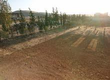 للبيع ارض زراعية صحناياطابو اخضر مالك واحد