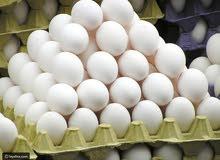 بيض فيومي بلدي مخصب مكفول بإذن الله تعالى 85 بالميه