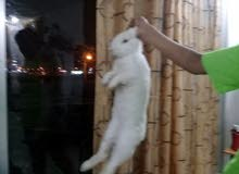 good rabbit and cute 3kg