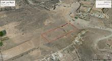 مزرعة 4هكتارات للبيع فى الزياينة بالقربوللى