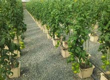 بيوت محمية زراعية + وانظمة الزراعة المائية