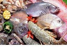 بيع جميع انواع سمك طازج من القطيف واجبيل