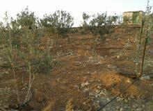 مززرعة للبيع في بلعما الزيتونة