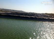 مزرعة سمك للبيع في غور الاردن